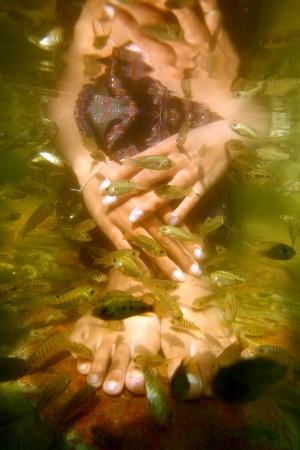 fish spa: fish spa Stock Photo