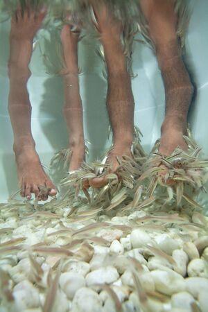 fish spa: Fish spa Therapy Stock Photo