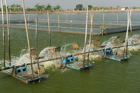 shrimp farm in thailand photo