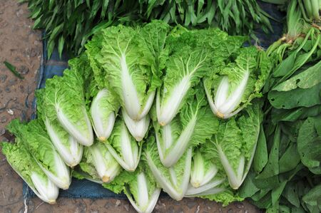 Fresh Organic Vegetables in Market  Stock Photo - 16603726