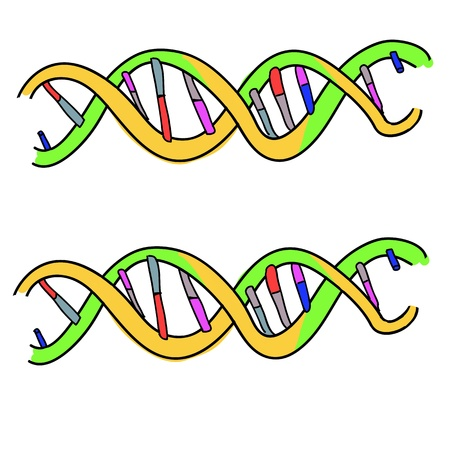 cell growth: Illustration of DNA helix on white
