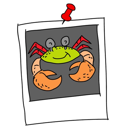 marina life:  crab cartoon  Illustration