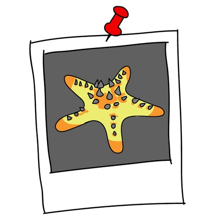 marina life: spine seastar cartoon in picture frame