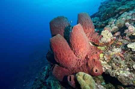 stovepipe: Stove-pipe Sponge