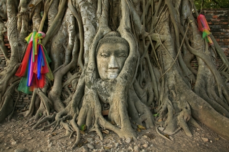 Wat Mahathat Buddha head in tree, Ayutthaya photo
