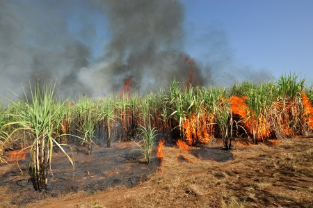 Sugarcane on Fire in thailand  Stock Photo