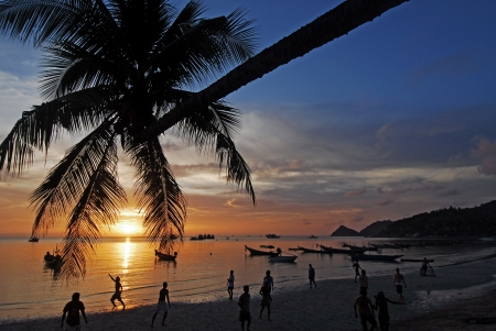 Palm tree over lagoon with boats at sunset. Koh Tao island, Thailand  photo