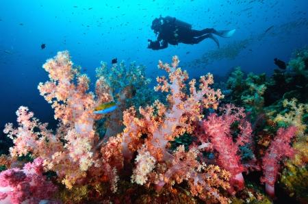 coral colony: Morbido colonia di corallo, Similan island Thailandia