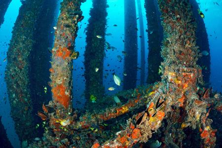 School of fish underwater near oil rig  photo