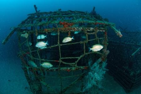 mabul: school of fish on artificial reef. Taken in Mabul, Borneo, Malaysia.