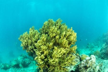 bright coral underwater in Sipadan, Malaysia photo