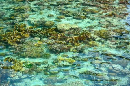 mabul: crystal clear sea in Sipadan Mabul  Resort - Malaysia  Stock Photo