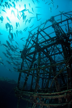 School of jackfish on artificial reef in Mabul, kapalai, Malaysia photo