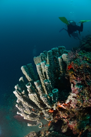 Giant spong in Mabul, Malaysia photo