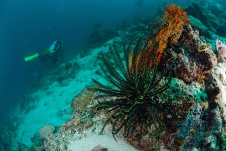 dark green feather starl in Mabul, Malaysia photo
