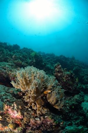 mabul: coral in Mabul, Malaysia Stock Photo