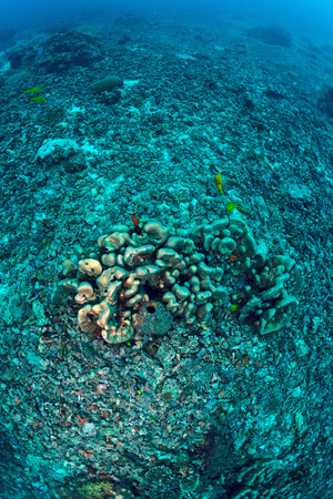 coral reef has been completely destroyed Stock Photo - 22730248