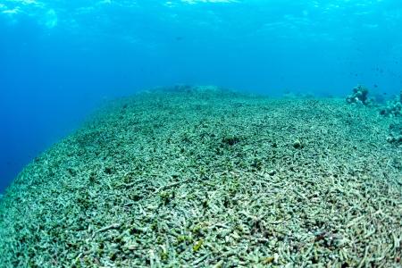 サンゴ礁を完全に破壊されて 写真素材