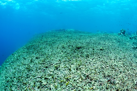 coral ocean: coral reef has been completely destroyed