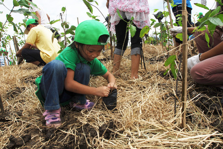 industrail: CHA CHOENG SAO - AUGUST 3 ; Unidentified children are planting tiny trees around industrail zone, August 3,2008, Cha choeng sao, Thailand