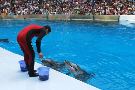 BANGKOK - MAY 10: Instructors perform with Dolphins at show, Safari world on May 10 2008 in Bangkok, Thailand.