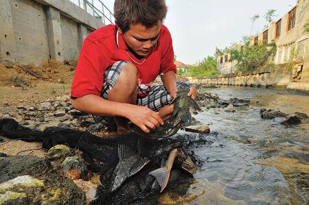 specie: THAILAND - DECEMBER 18 : plecostomus (sucker fish) alien specie outbreak in river on December 18, 2010, Chonburi province, Thailand.