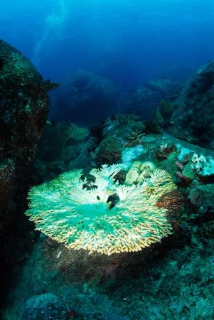 coral bleaching in Thailand photo