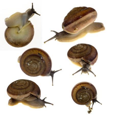 land slide: set of Garden snail on white background close up Stock Photo
