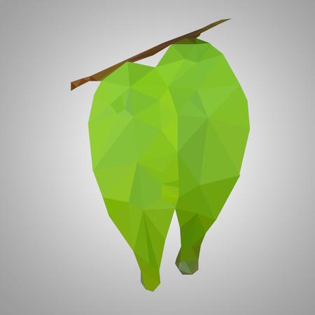 Polygon fresh leaf photo
