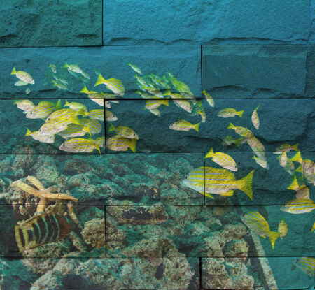 marinelife: marinelife in reef Mural. The stone painting  concept