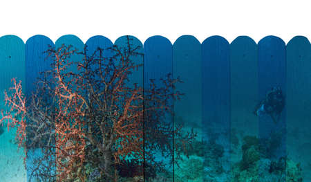 marinelife: marinelife in reef Mural. The wooden fence painting  concept