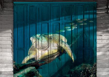 sipadan: turtle in Sipadan, Malaysia Mural. The wood painting  concept Stock Photo