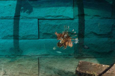sipadan: lionfish, Sipadan Malaysia Mural. The stone painting  concept