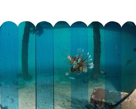 sipadan: lionfish, Sipadan Malaysia Mural. The wood painting  concept Stock Photo