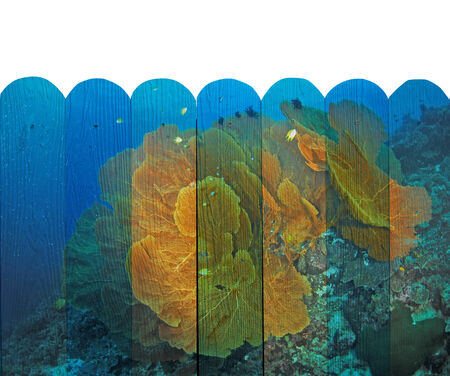 seafan: seafan Mural. The wood painting  concept