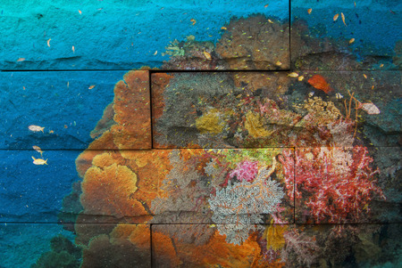 seafan: colorful ofseafan and soft coral Mural. The stone painting  concept