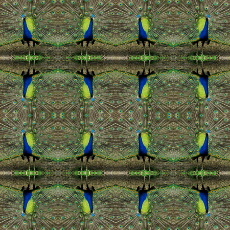 symmetry: peacock, symmetry background