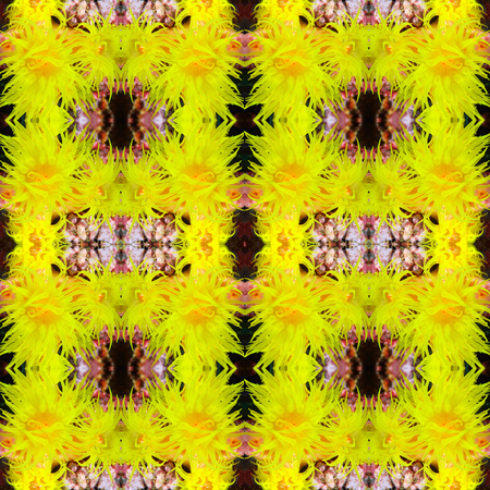 polyp: coral polyp, symmetry background Stock Photo