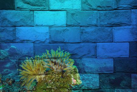 seastar: feather seastar Mural. The brick painting concept