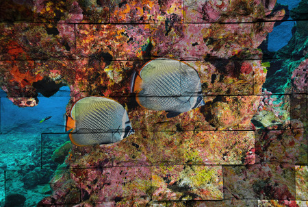 butterfly fish: butterfly fish Mural. The brick painting concept