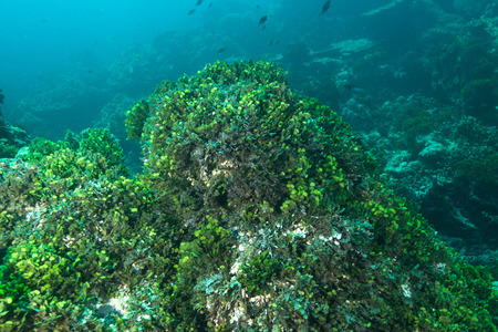 Coral and fish underwater in Similan Islands, Thailand photo