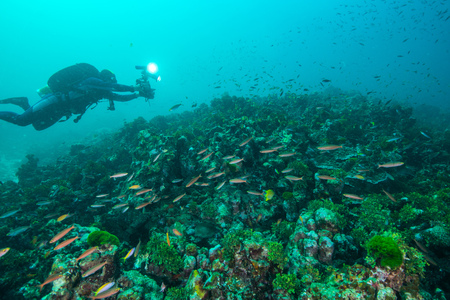 simian: Coral and fish underwater in Similan Islands, Thailand