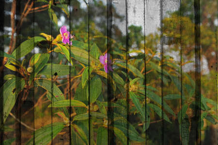 flower Mural. The wood painting concept photo