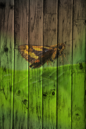 butterfly The wood painting concept. photo