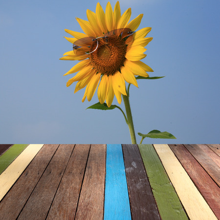 montage: Wood table top on sunflower montage concept