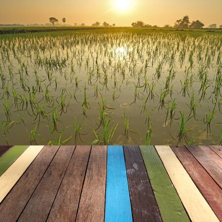 montage: Wood table top on rice field montage concept Stock Photo