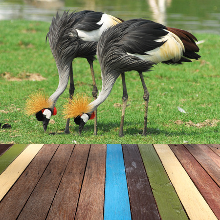 montage: Wood table top on grey crowned crane background montage concept