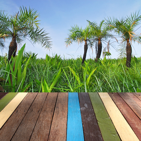 montage: Wood table top on palm tree montage concept