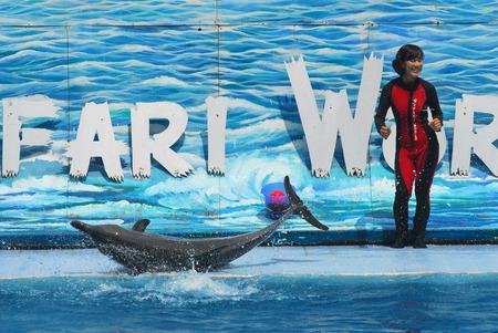 pink dolphin: BANGKOK - MAY 20: Instructors perform with Dolphins at show, Safari world on May 20 2008 in Bangkok, Thailand.