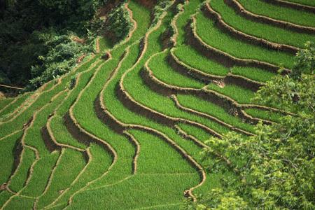 lao: Terraced rice fields in Sapa, Lao Cai, Vietnam